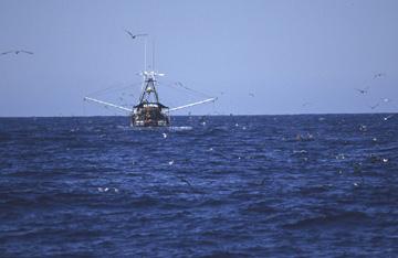 Oceanic Ecoregion scene