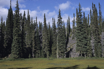 West Cascades Ecoregion scene